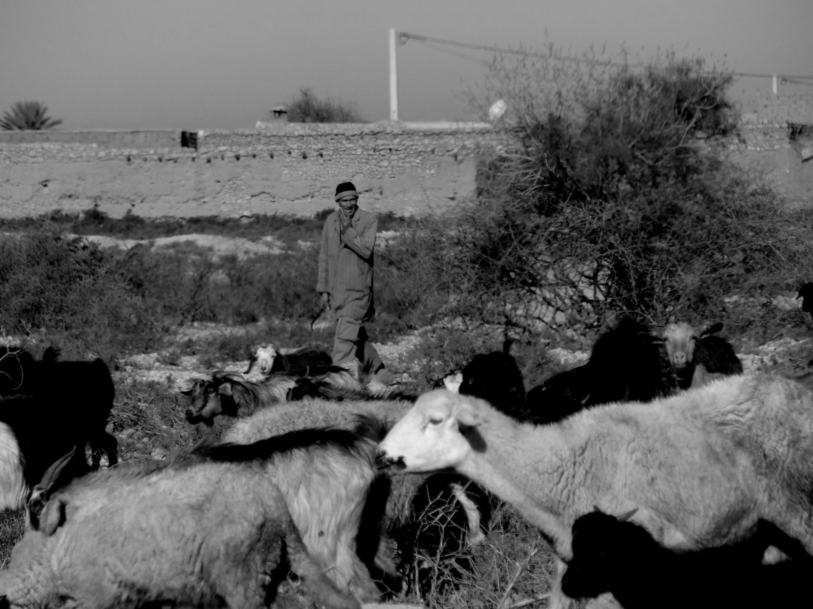 The berber shepherd
